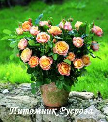 BABY ROMANTICA (Бэби Романтика)