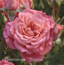 ALLEGRO SYMPHONIE (Аллегро Симфони)