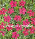 "Гвоздика травянка (Dianthus deltoides) ""Brilliant"""