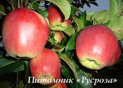 "Яблоня ""Лигол"""