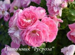 LOVELY PINK  ( Лавли Пинк )